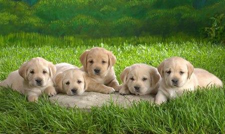 狗年話狗:香港寵物犬飼養面面觀-華發網繁體版