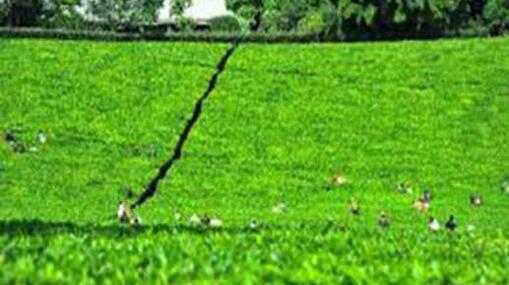 肯尼亞茶業機械化是大勢所趨-華發網繁體版