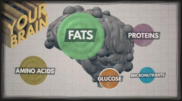 吃得不對不光會變胖,竟然還會變笨!-華發網繁體版