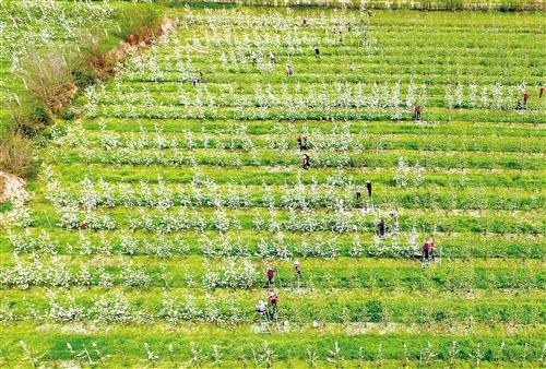 """科技援助農業,結出中以""""一帶一路""""合作新碩果"""