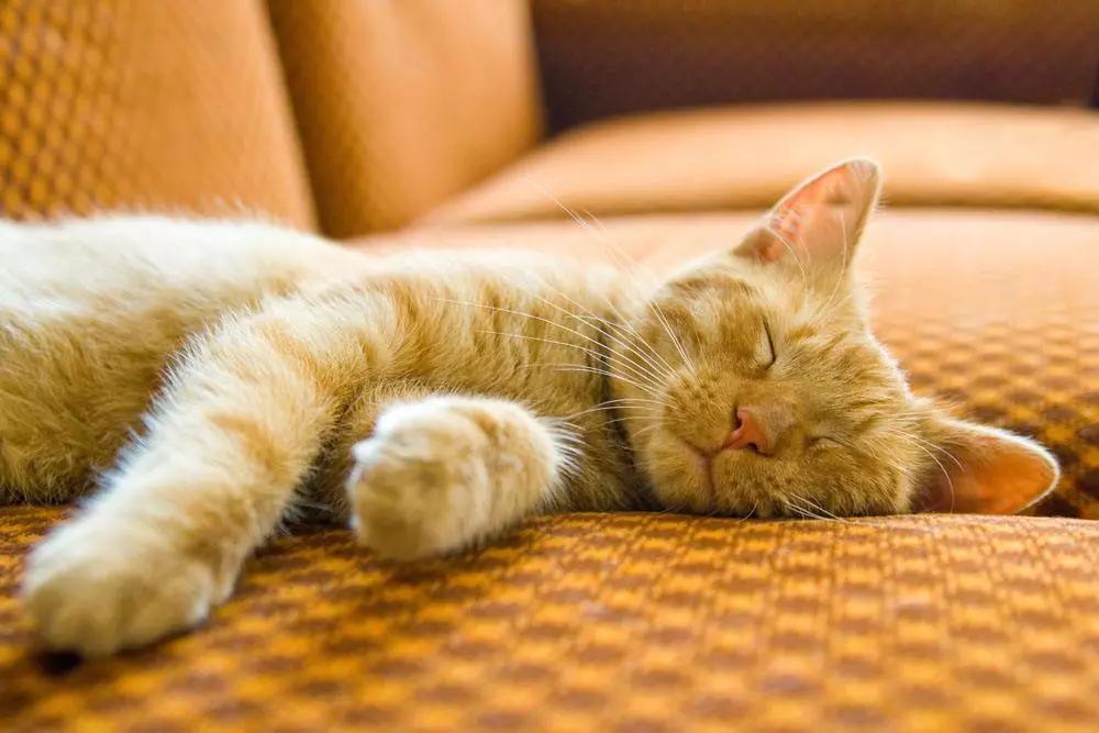 網傳午睡時間不能超過30分鐘?是時候告訴妳真相了-華發網繁體版