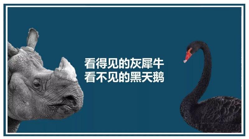 人生馬拉松 - 黑天鵝與灰犀牛