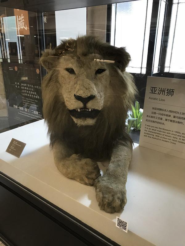 中國最早博物館溯源