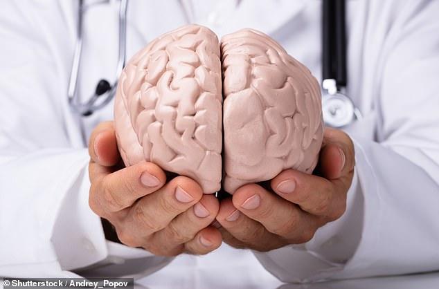 科學家很快可在實驗室培養出人類大腦