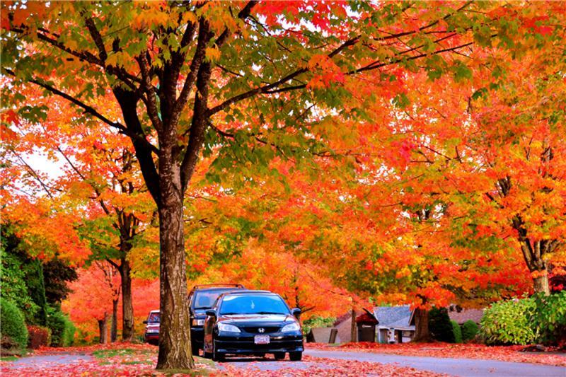 加拿大秋遊賞楓正是時節-華發網繁體版