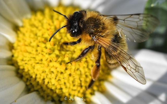 """蜜蜂也能""""看懂""""數字"""