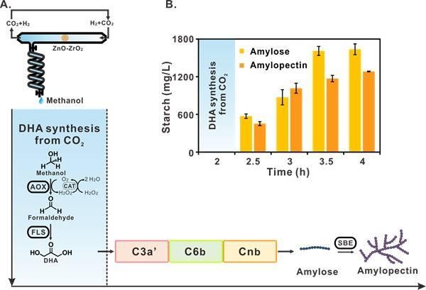 我國首次實現二氧化碳到澱粉從頭合成,人工合成澱粉好吃嗎?