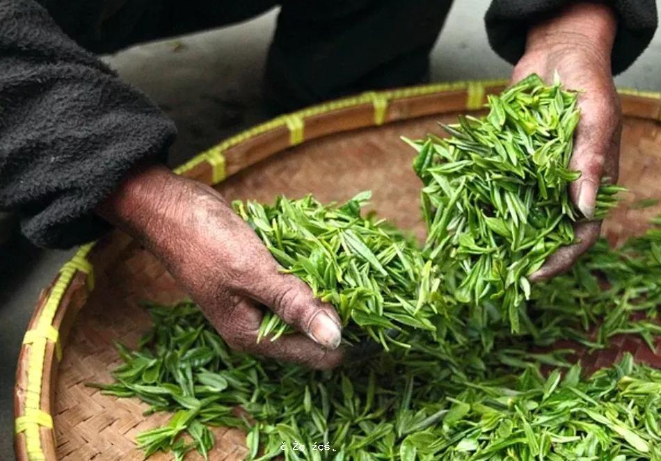 保溫杯泡茶有害健康嗎?有一種茶,增加患癌風險!